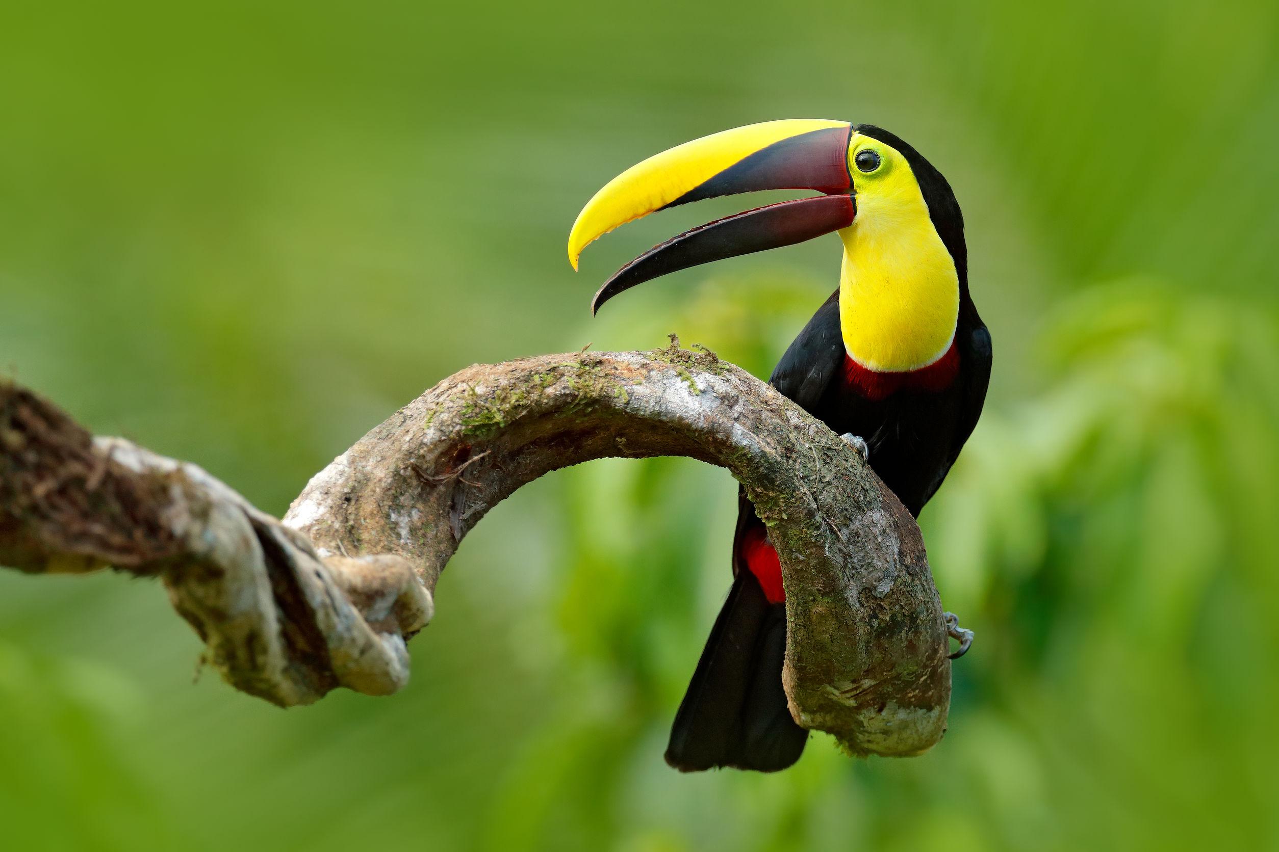 viaggio Amazzonia colombiana